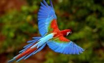 especes oiseaux menacees