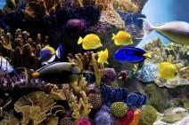 aquarium-paris-bon-plan