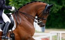 equestriades-orange